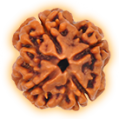 Four Mukhi – Quadra Phased Rudraksha