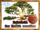 Rudraksha report for Health remedies